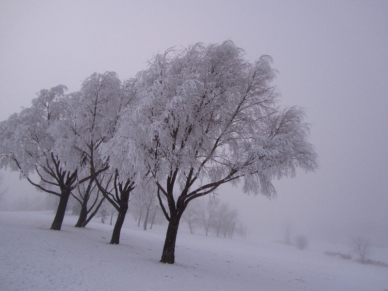 Leaning Trees in Fog