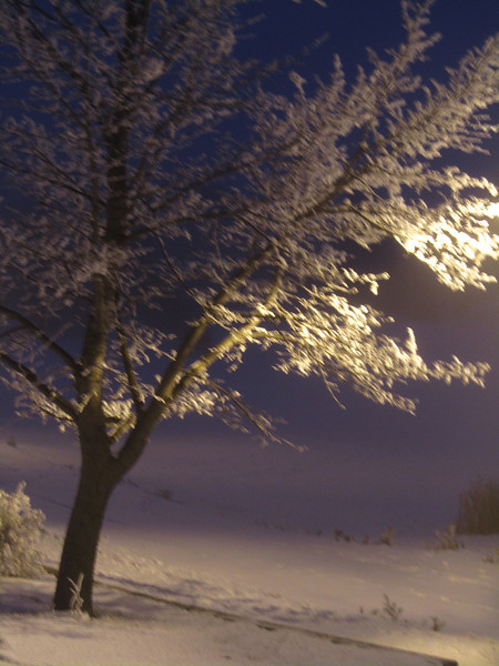 Shimmering Frost