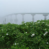 7/10/2007 9:57 am<br /> <br /> Campobello- Lubec international bridge