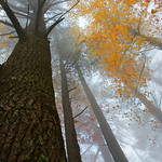 Colorful, foggy autumn forest.