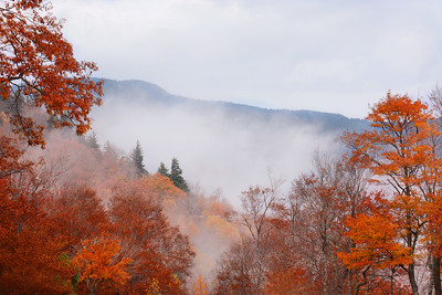 Foggy morning in North Carolina forest, Blue Ridge Mountains.