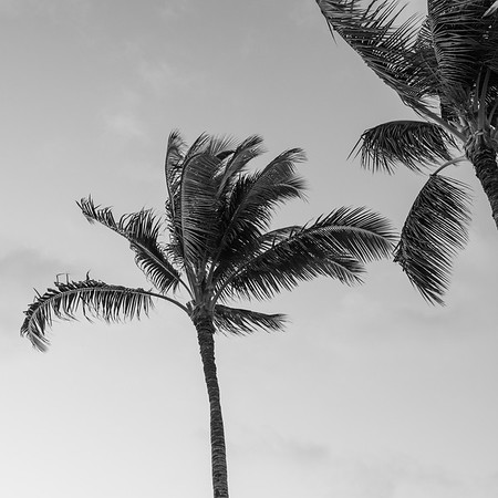 Travel_Hawaii_03052020_0071