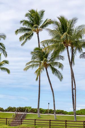 Travel_Hawaii_03032020_0304