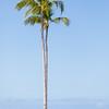 Travel_Hawaii_032020_0118