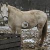 White Horse, Holmdel Park, New Jersey