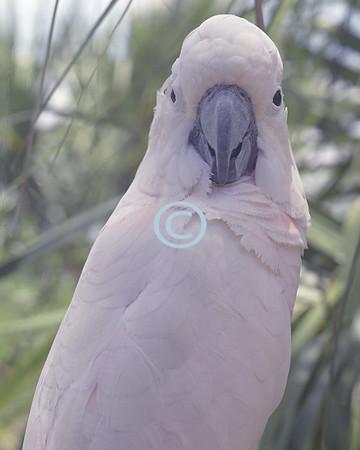 Cockatoo, Florida