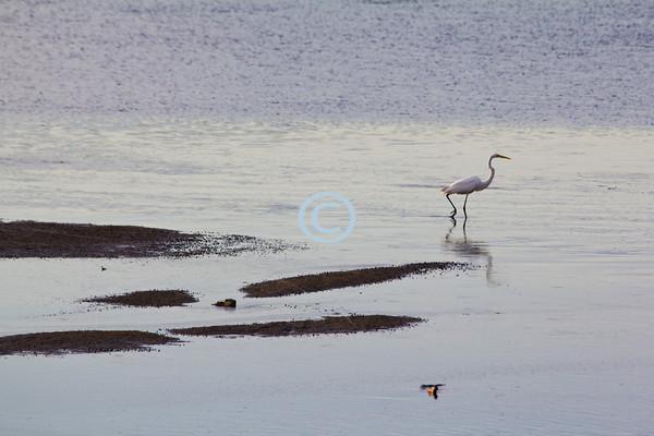 Heron, Sandy Hook, New Jersey