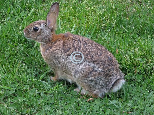 Bunny, up close