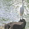Seabird, Kauai