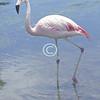 Flamingo, Florida