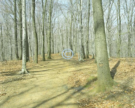 Trail, Holmdel Park, New Jersey