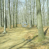 Trail, Holmdel Park, New Jersey