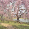 Pretty in pink, Holmdel Park, New Jersey