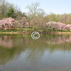 Spring, Holmdel Park, New Jersey