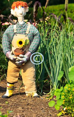 Scarecrow, Deep Cut Park, New Jersey