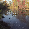 Pond, Holmdel Park,New Jersey