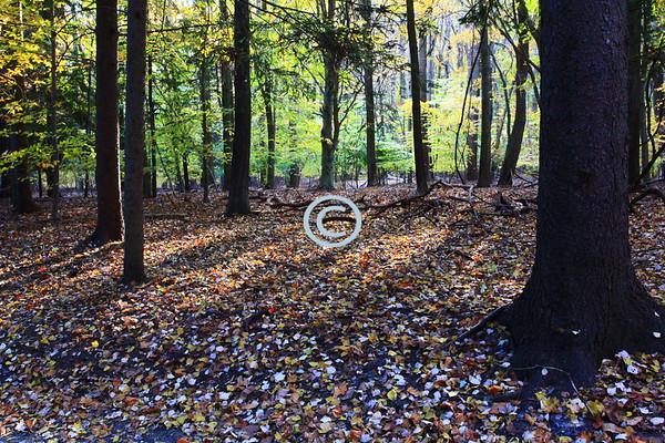 Woods, Holmdel Park, New Jersey