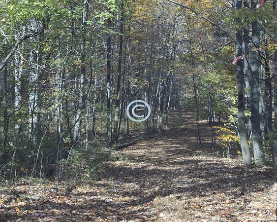Trail, Holmdel Park,New Jersey