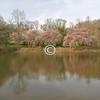 Spring landscape, Holmdel Park, New Jersey