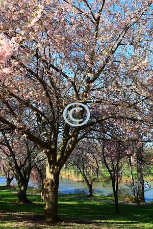 Spring scene, Holmdel Park, New Jersey