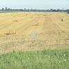 Hay field, Ontario, Canada