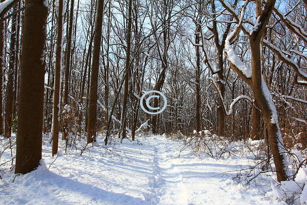 Snowy Woods, Middletown, New Jersey