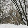 Snowy Woods, Avenel, New Jersey