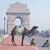 Camel, India Gate, New Delhi