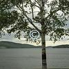 Silver Birch, Schroon Lake, New York