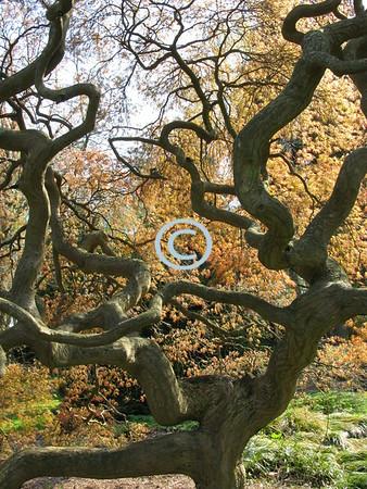 Intricate tree design