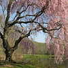 Pretty in Pink!<br /> <br /> Do yourself a favor:<br /> Stop and savor<br /> The beauty of spring:<br /> What joy it'll bring!<br /> - Kulbir
