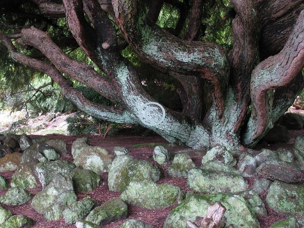 Gnarled Tree, Deep Cut Gardens, New Jersey