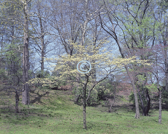 Spring Scene Branch Brook Park, New Jersey