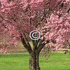 This cherry tree is prettier<br /> Than the bride,<br /> But she's wittier,<br /> And green-eyed.<br /> - Kulbir
