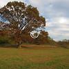 Oak Tree, Poricy Park, Middletown, New Jersey