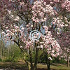 Flowering trees<br /> Attract bees,<br /> Song birds,<br /> And poetic words.<br /> - Kulbir