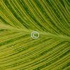 Pattern, leaf