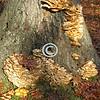 Mushrooms On A Tree Trunk