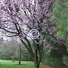 Flowering trees:<br /> Sure to please<br /> Cynical hearts<br /> Who throw darts.<br /> - Kulbir