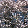 Spring blossom, New Jersey