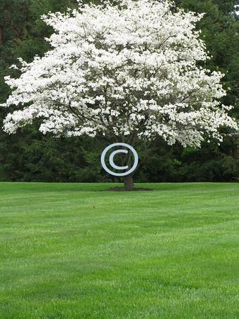 Spring blossom:<br /> Simply awesome.<br /> - Kulbir