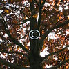 I'm a tree;<br /> I've a soul;<br /> Out of me,<br /> Don't make a pole.<br /> - Kulbir
