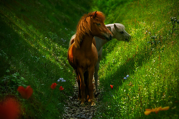 Novel | Two Beautiful Wild Horses Eating in a Surreal Flowery Dreamy Dutch Landscape Wilde Paarden Maashorst Nederland