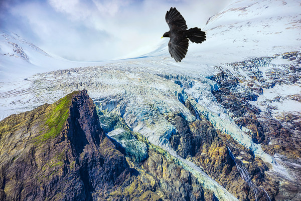 Freedom Be Free   Spread your wings and fly float on the wind dream bird crow chough Austria Oesterreich Mountain Highest Grossglockner High Alpine Road Colorful Art Poster Wallpaper Free Download Screen Wall Decoration Inspiration Snow Ice Motivational