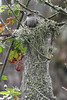 Bushtit and Nest
