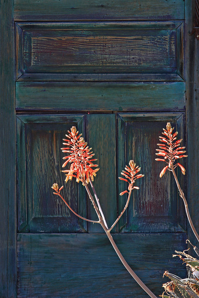 Door and Flowers: Tucson, AZ (Feb 2011)