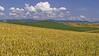 The greens and golds of the Palouse in early Summer: lower Steptoe Butte, WA (July 18, 2012)