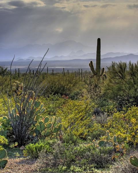 Southern Arizona Desert (2-15-12)