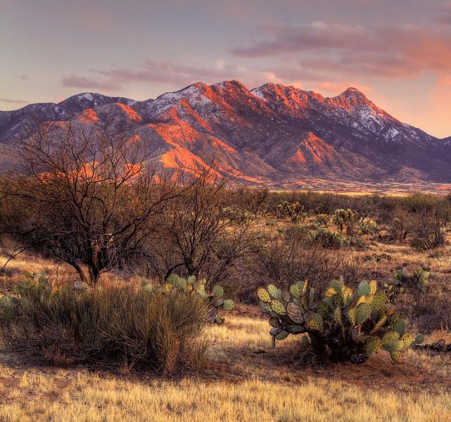Santa Rita Mountains, AZ: February, 2013