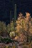 Sunset at Mountain Park near Tucson, AZ (March, 2011)